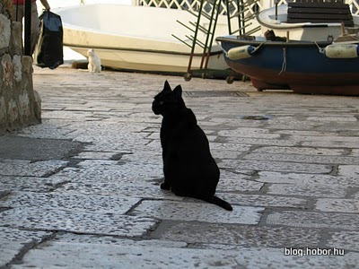Cats in DUBROVNIK, Croatia