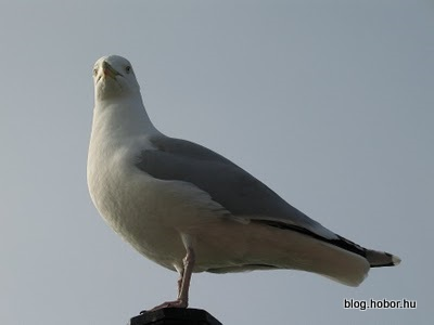 BRIGHTON, East Sussex, UK - Sea-gull on the Pier