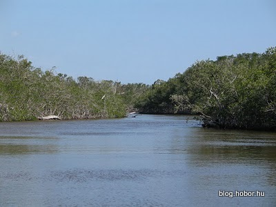 EVERGLADES National Park, Florida, USA (Part 3 - Boat tour)