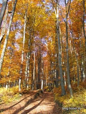 Boroszlán-trail, BAKONYBÉL, Hungary