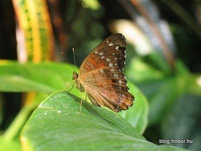 Schmetterling Haus (Butterfly House), VIENNA, Austria