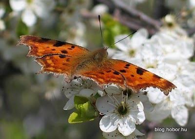 Butterfly, PÉCS, Hungary